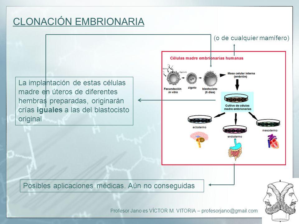 Profesor Jano es VÍCTOR M. VITORIA – profesorjano@gmail.com CLONACIÓN EMBRIONARIA La implantación de estas células madre en úteros de diferentes hembr