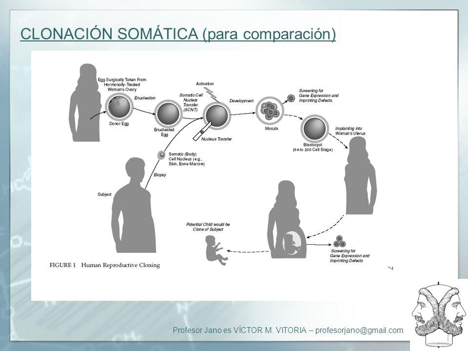Profesor Jano es VÍCTOR M. VITORIA – profesorjano@gmail.com CLONACIÓN SOMÁTICA (para comparación)