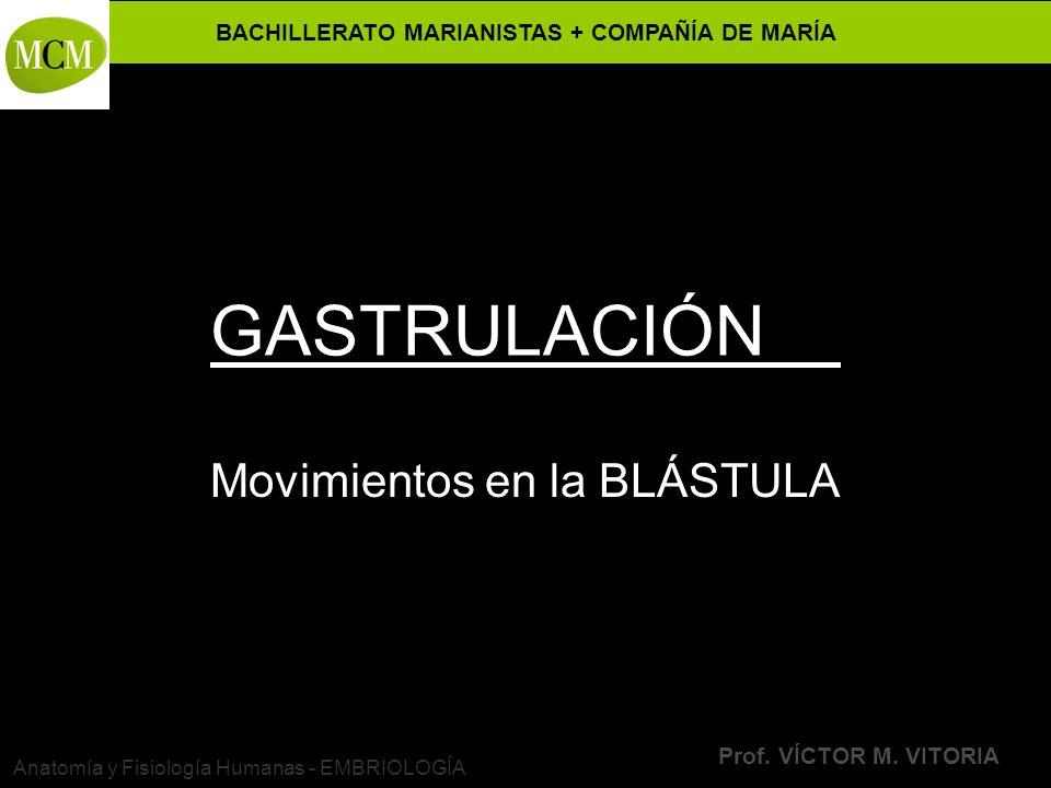 BACHILLERATO MARIANISTAS + COMPAÑÍA DE MARÍA Prof. VÍCTOR M. VITORIA Anatomía y Fisiología Humanas - EMBRIOLOGÍA GASTRULACIÓN Movimientos en la BLÁSTU