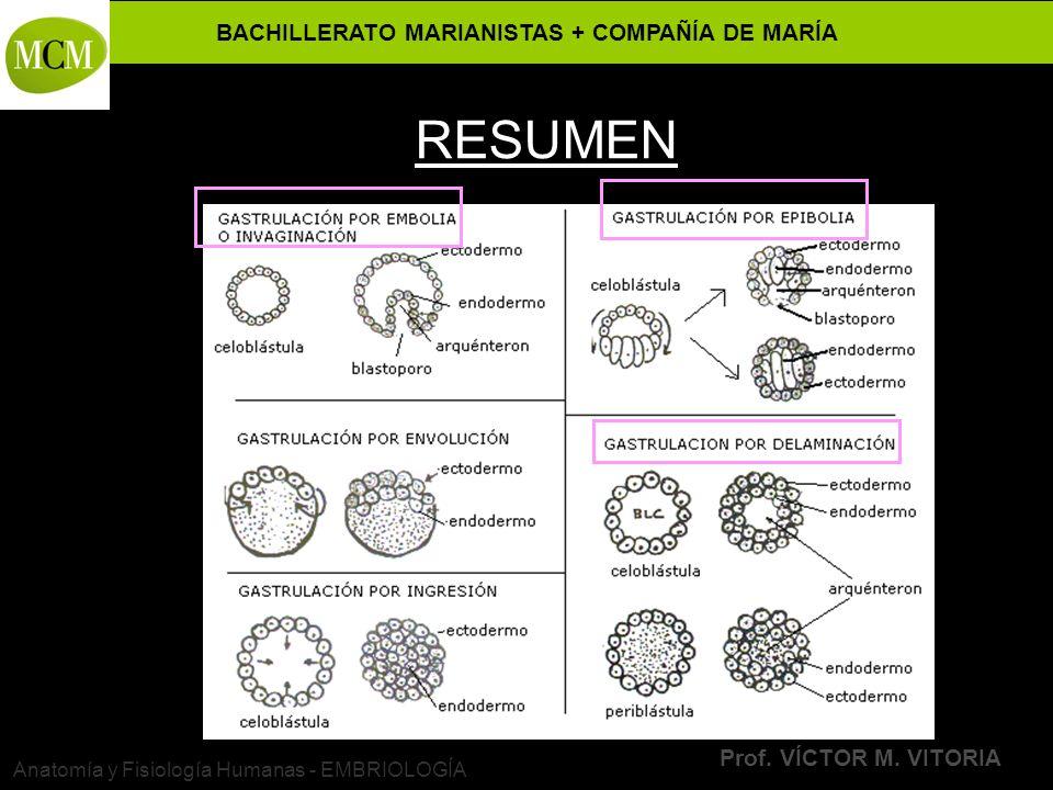 BACHILLERATO MARIANISTAS + COMPAÑÍA DE MARÍA Prof. VÍCTOR M. VITORIA Anatomía y Fisiología Humanas - EMBRIOLOGÍA RESUMEN