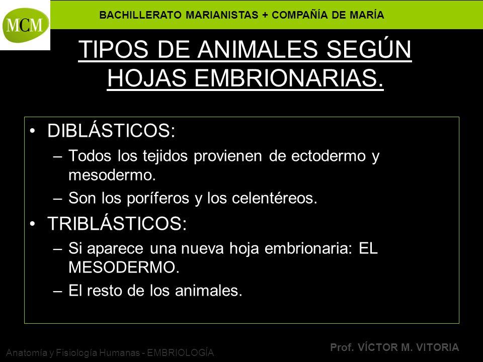 BACHILLERATO MARIANISTAS + COMPAÑÍA DE MARÍA Prof. VÍCTOR M. VITORIA Anatomía y Fisiología Humanas - EMBRIOLOGÍA TIPOS DE ANIMALES SEGÚN HOJAS EMBRION