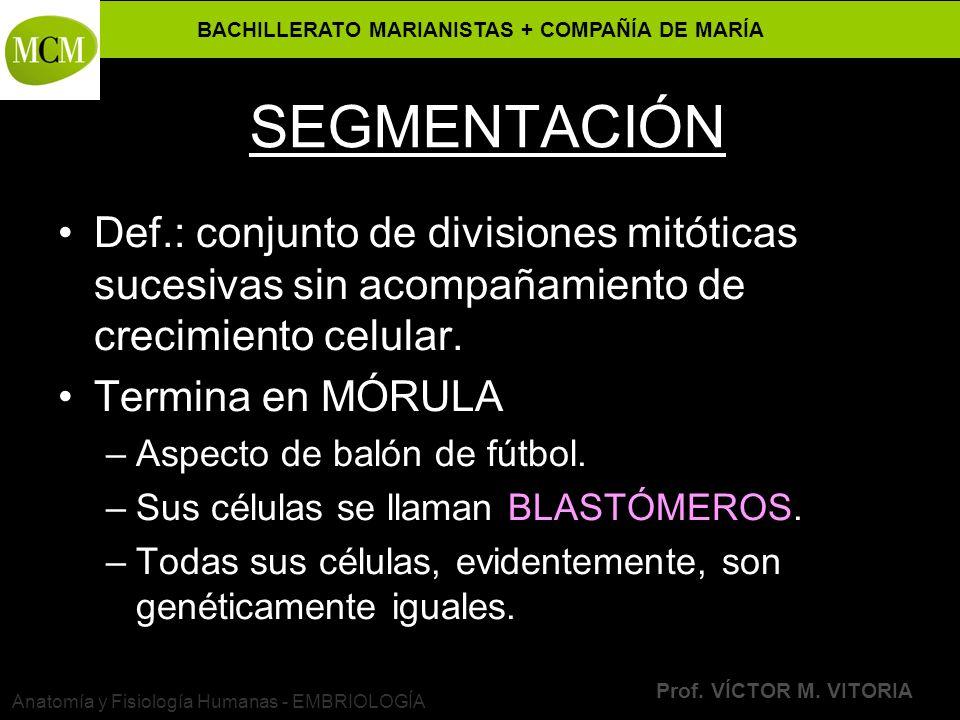 BACHILLERATO MARIANISTAS + COMPAÑÍA DE MARÍA Prof. VÍCTOR M. VITORIA Anatomía y Fisiología Humanas - EMBRIOLOGÍA SEGMENTACIÓN Def.: conjunto de divisi