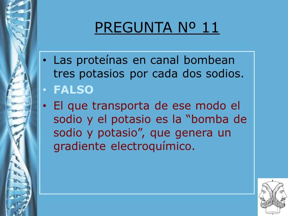 PREGUNTA Nº 11 Las proteínas en canal bombean tres potasios por cada dos sodios. FALSO El que transporta de ese modo el sodio y el potasio es la bomba