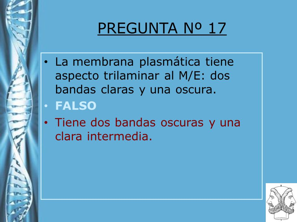 PREGUNTA Nº 17 La membrana plasmática tiene aspecto trilaminar al M/E: dos bandas claras y una oscura. FALSO Tiene dos bandas oscuras y una clara inte
