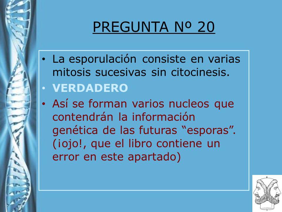 PREGUNTA Nº 20 La esporulación consiste en varias mitosis sucesivas sin citocinesis. VERDADERO Así se forman varios nucleos que contendrán la informac