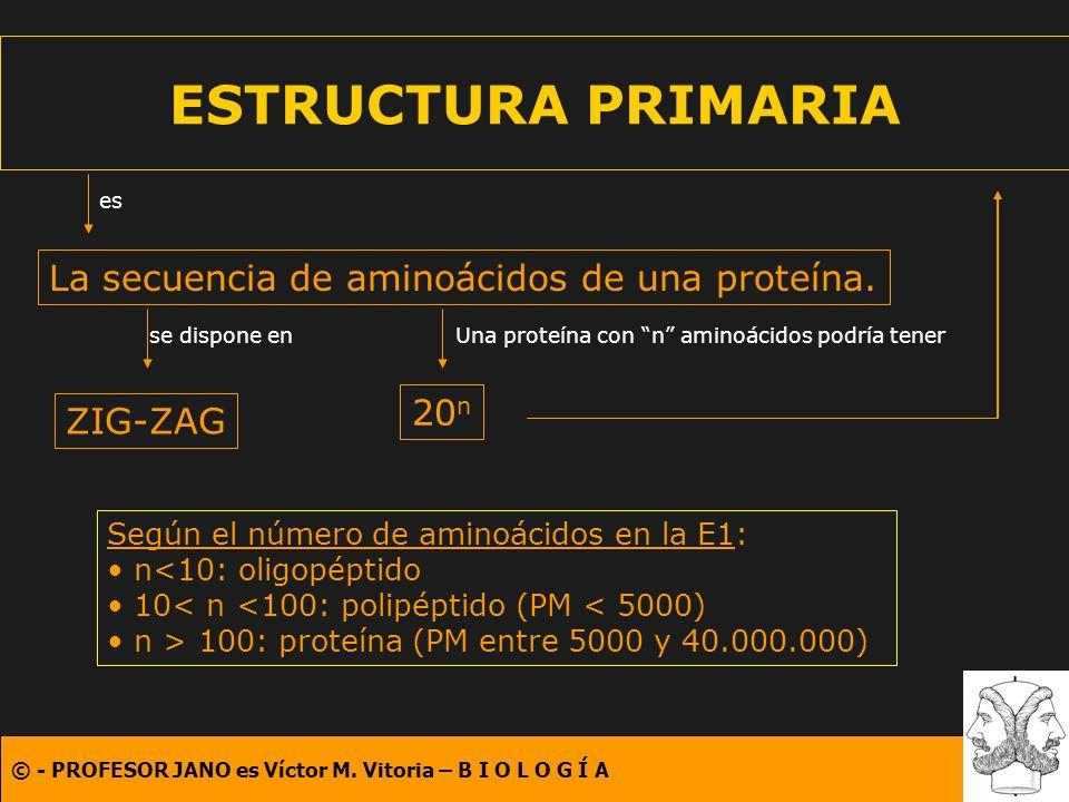 © - PROFESOR JANO es Víctor M. Vitoria – B I O L O G Í A ESTRUCTURA PRIMARIA