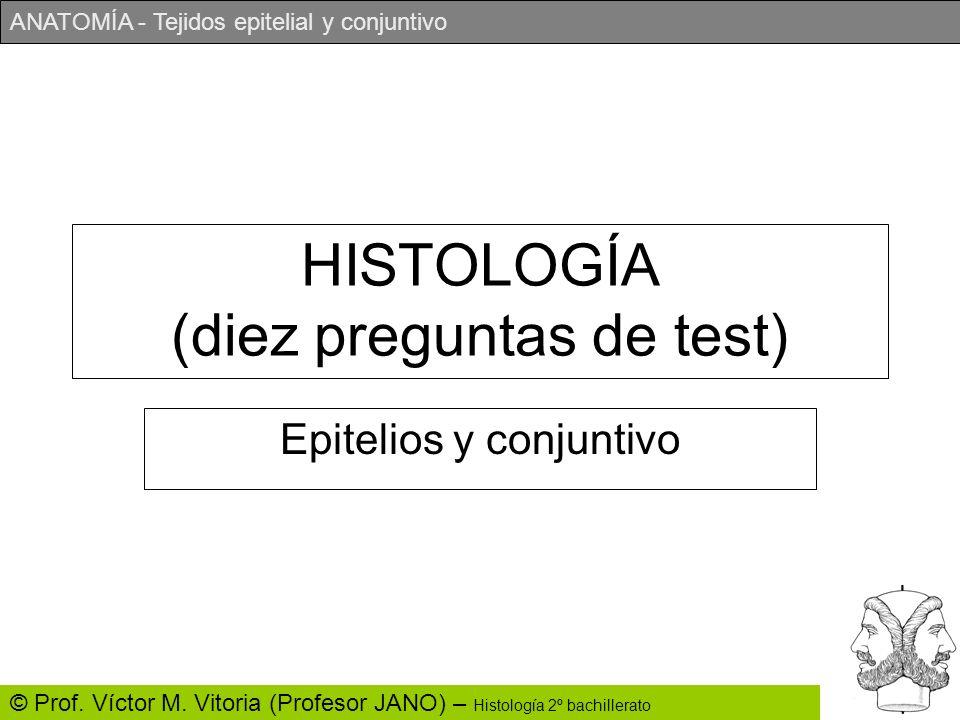 ANATOMÍA - Tejidos epitelial y conjuntivo © Prof. Víctor M. Vitoria (Profesor JANO) – Histología 2º bachillerato HISTOLOGÍA (diez preguntas de test) E
