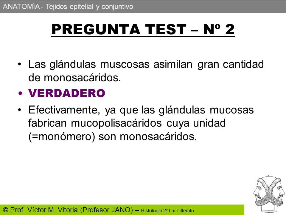 ANATOMÍA - Tejidos epitelial y conjuntivo © Prof. Víctor M. Vitoria (Profesor JANO) – Histología 2º bachillerato PREGUNTA TEST – Nº 2 Las glándulas mu