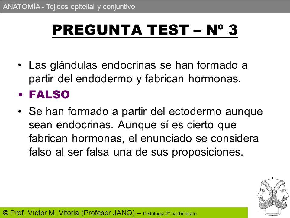 ANATOMÍA - Tejidos epitelial y conjuntivo © Prof. Víctor M. Vitoria (Profesor JANO) – Histología 2º bachillerato PREGUNTA TEST – Nº 3 Las glándulas en