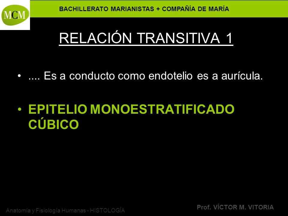BACHILLERATO MARIANISTAS + COMPAÑÍA DE MARÍA Prof. VÍCTOR M. VITORIA Anatomía y Fisiología Humanas - HISTOLOGÍA RELACIÓN TRANSITIVA 1.... Es a conduct