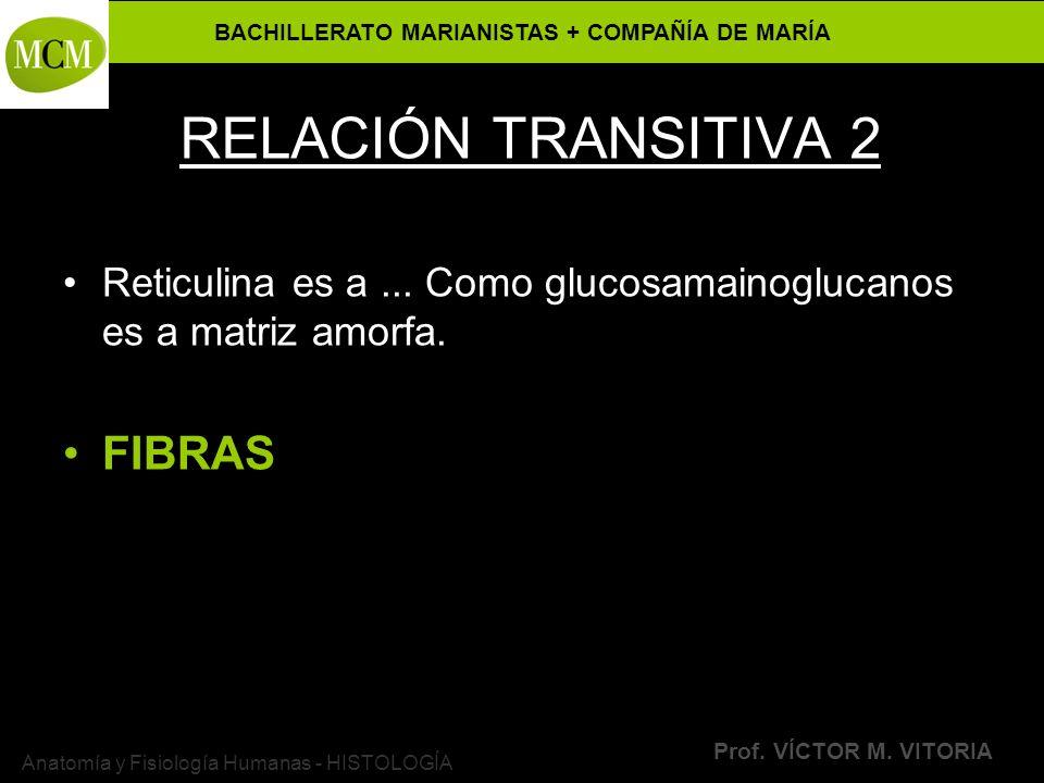 BACHILLERATO MARIANISTAS + COMPAÑÍA DE MARÍA Prof. VÍCTOR M. VITORIA Anatomía y Fisiología Humanas - HISTOLOGÍA RELACIÓN TRANSITIVA 2 Reticulina es a.