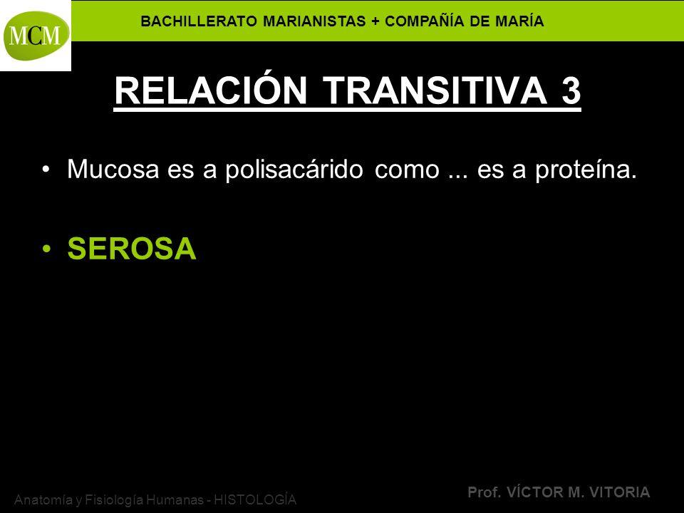 BACHILLERATO MARIANISTAS + COMPAÑÍA DE MARÍA Prof. VÍCTOR M. VITORIA Anatomía y Fisiología Humanas - HISTOLOGÍA RELACIÓN TRANSITIVA 3 Mucosa es a poli