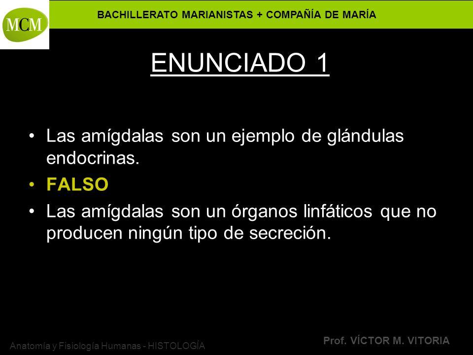 BACHILLERATO MARIANISTAS + COMPAÑÍA DE MARÍA Prof. VÍCTOR M. VITORIA Anatomía y Fisiología Humanas - HISTOLOGÍA ENUNCIADO 1 Las amígdalas son un ejemp