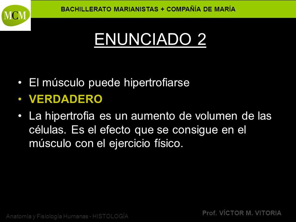 BACHILLERATO MARIANISTAS + COMPAÑÍA DE MARÍA Prof. VÍCTOR M. VITORIA Anatomía y Fisiología Humanas - HISTOLOGÍA ENUNCIADO 2 El músculo puede hipertrof