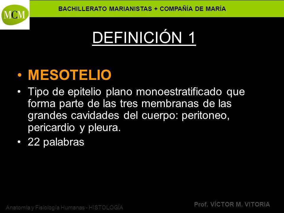 BACHILLERATO MARIANISTAS + COMPAÑÍA DE MARÍA Prof. VÍCTOR M. VITORIA Anatomía y Fisiología Humanas - HISTOLOGÍA DEFINICIÓN 1 MESOTELIO Tipo de epiteli