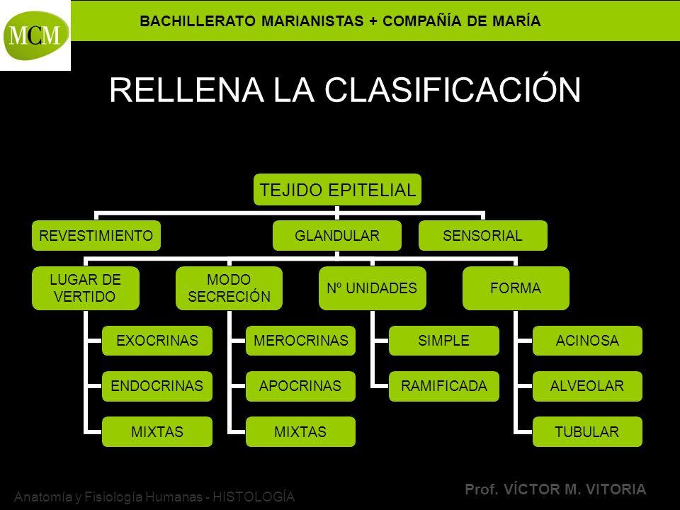 BACHILLERATO MARIANISTAS + COMPAÑÍA DE MARÍA Prof. VÍCTOR M. VITORIA Anatomía y Fisiología Humanas - HISTOLOGÍA RELLENA LA CLASIFICACIÓN TEJIDO EPITEL