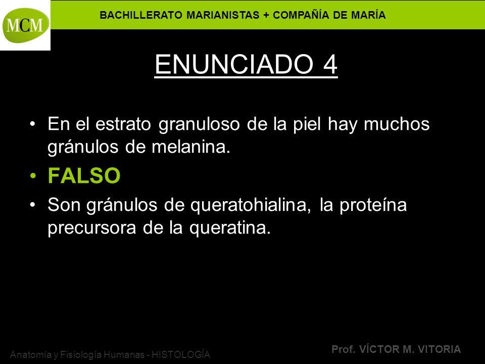 BACHILLERATO MARIANISTAS + COMPAÑÍA DE MARÍA Prof. VÍCTOR M. VITORIA Anatomía y Fisiología Humanas - HISTOLOGÍA ENUNCIADO 4 En el estrato granuloso de