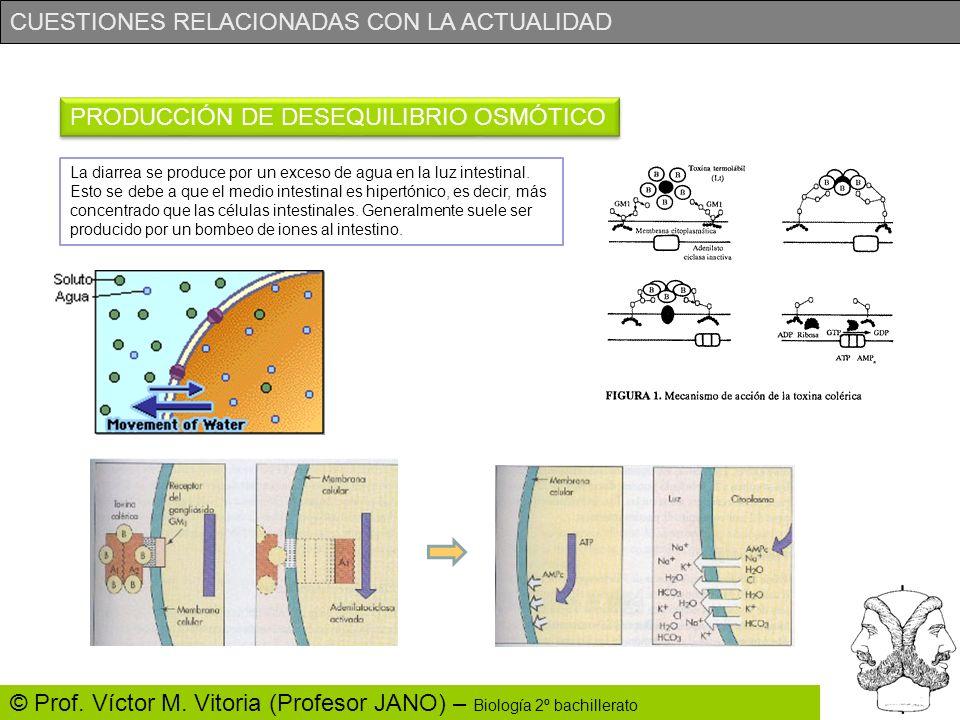 CUESTIONES RELACIONADAS CON LA ACTUALIDAD © Prof. Víctor M. Vitoria (Profesor JANO) – Biología 2º bachillerato PRODUCCIÓN DE DESEQUILIBRIO OSMÓTICO La