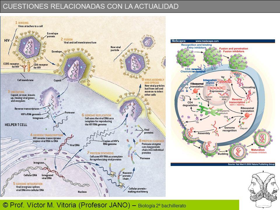 CUESTIONES RELACIONADAS CON LA ACTUALIDAD © Prof. Víctor M. Vitoria (Profesor JANO) – Biología 2º bachillerato