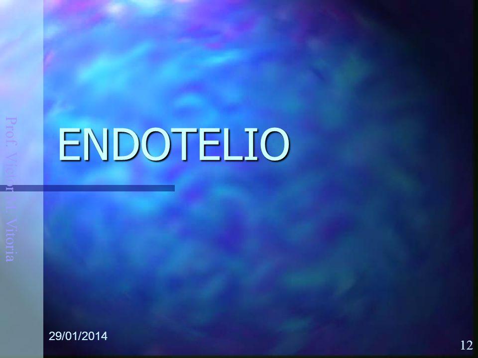 Prof. Víctor M. Vitoria 29/01/2014 12 ENDOTELIO