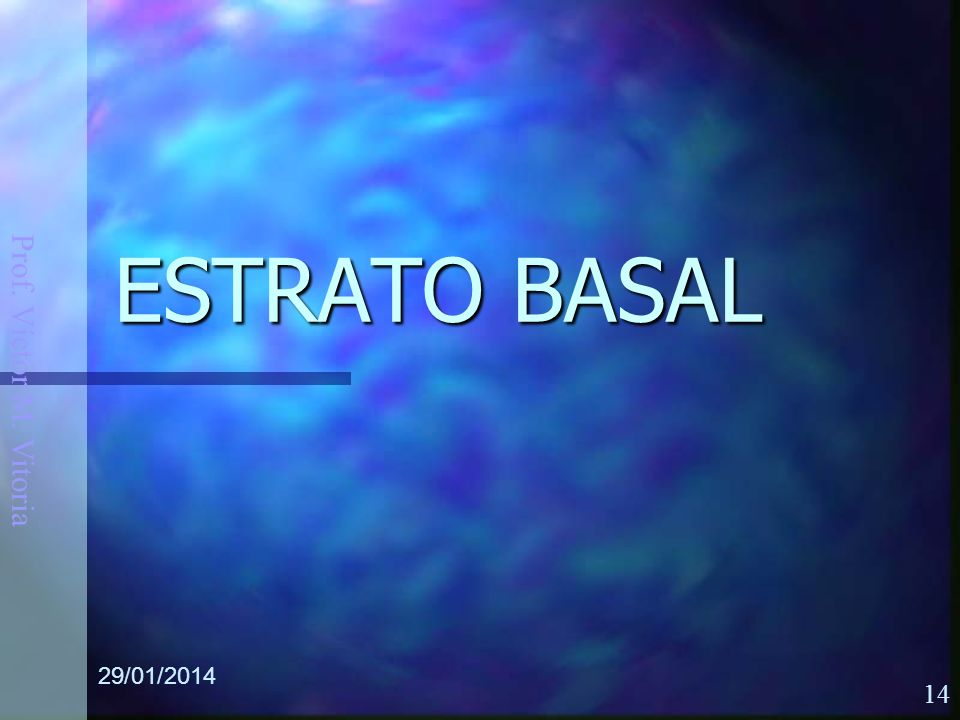 Prof. Víctor M. Vitoria 29/01/2014 14 ESTRATO BASAL