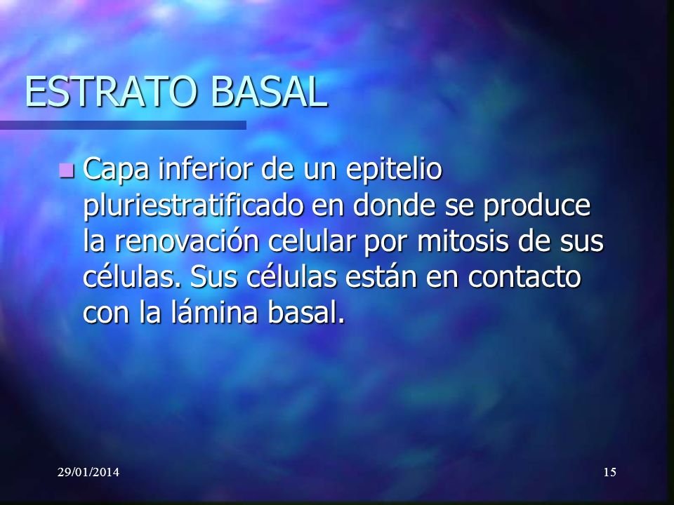 29/01/201415 ESTRATO BASAL Capa inferior de un epitelio pluriestratificado en donde se produce la renovación celular por mitosis de sus células.