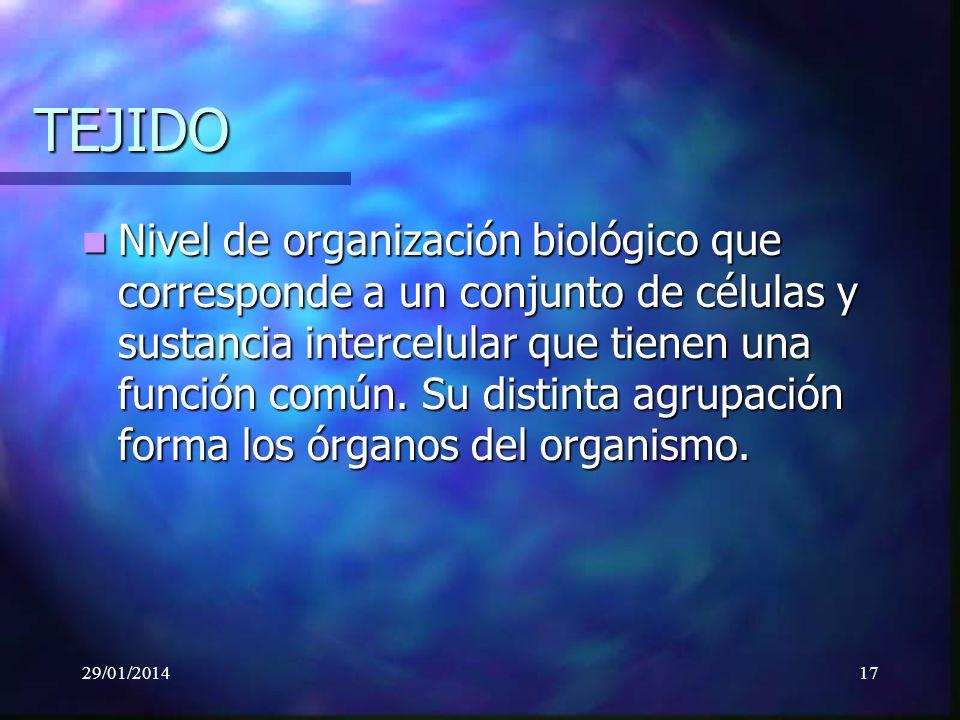 29/01/201417 TEJIDO Nivel de organización biológico que corresponde a un conjunto de células y sustancia intercelular que tienen una función común.