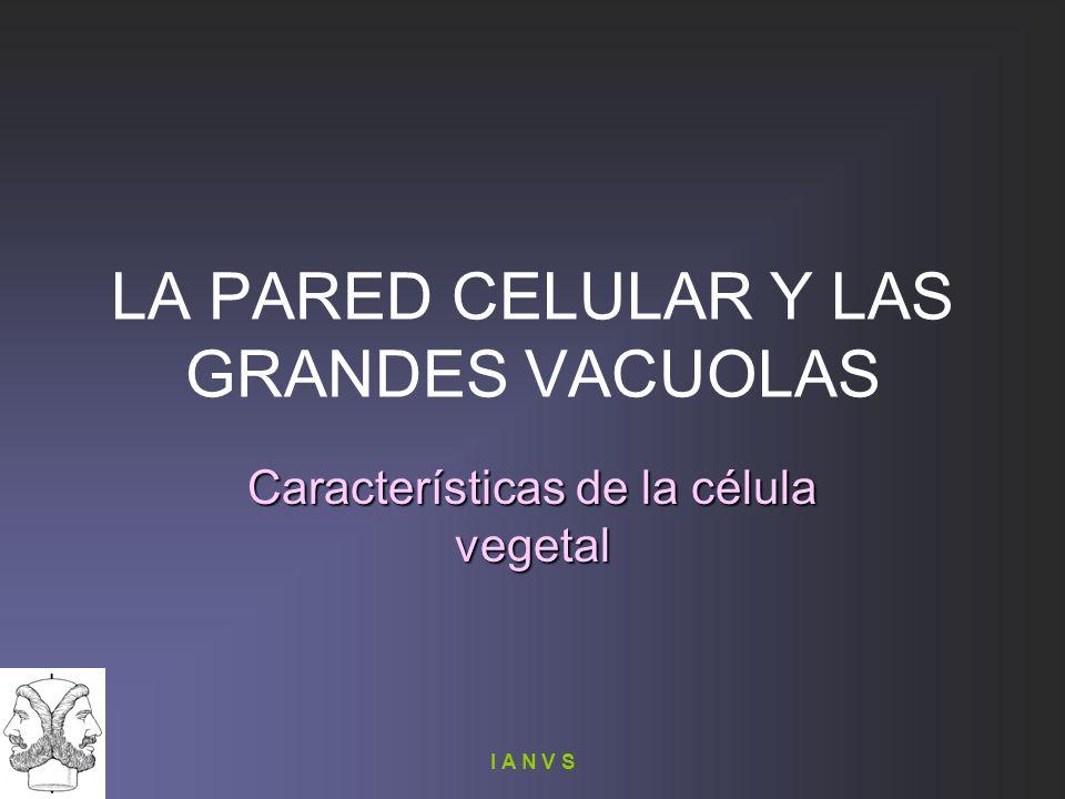I A N V S LA PARED CELULAR Y LAS GRANDES VACUOLAS Características de la célula vegetal