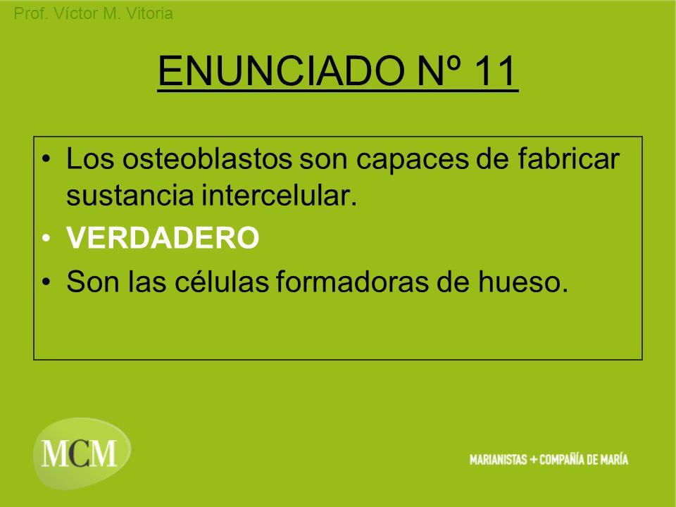 Prof. Víctor M. Vitoria ENUNCIADO Nº 11 Los osteoblastos son capaces de fabricar sustancia intercelular. VERDADERO Son las células formadoras de hueso