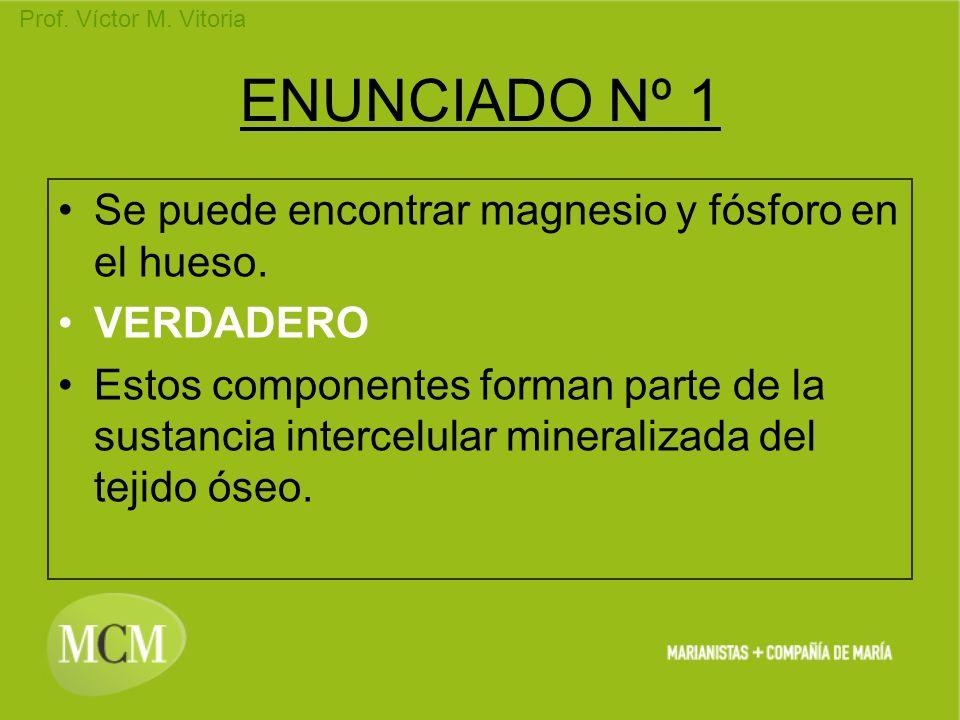Prof. Víctor M. Vitoria ENUNCIADO Nº 1 Se puede encontrar magnesio y fósforo en el hueso. VERDADERO Estos componentes forman parte de la sustancia int