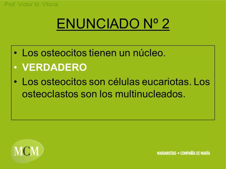 Prof. Víctor M. Vitoria ENUNCIADO Nº 2 Los osteocitos tienen un núcleo. VERDADERO Los osteocitos son células eucariotas. Los osteoclastos son los mult