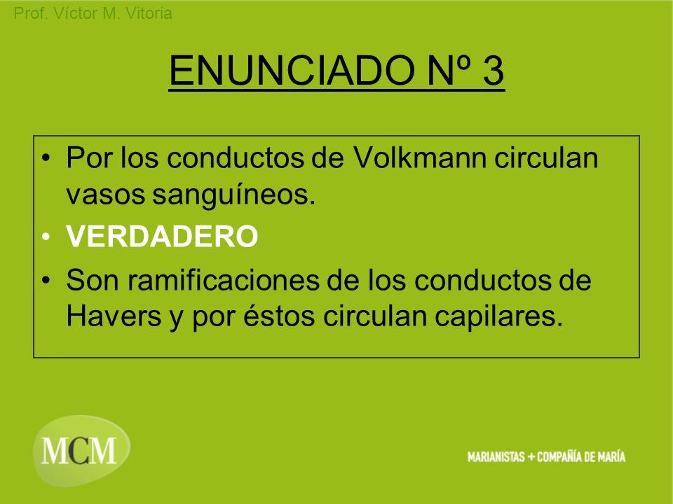 Prof. Víctor M. Vitoria ENUNCIADO Nº 3 Por los conductos de Volkmann circulan vasos sanguíneos. VERDADERO Son ramificaciones de los conductos de Haver