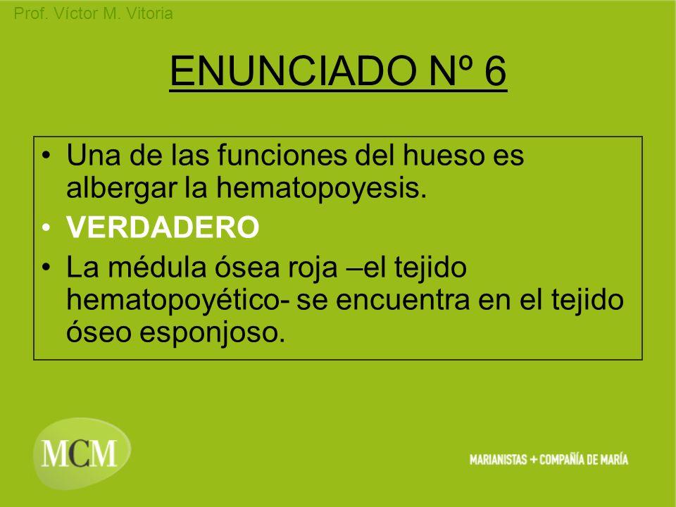 Prof. Víctor M. Vitoria ENUNCIADO Nº 6 Una de las funciones del hueso es albergar la hematopoyesis. VERDADERO La médula ósea roja –el tejido hematopoy
