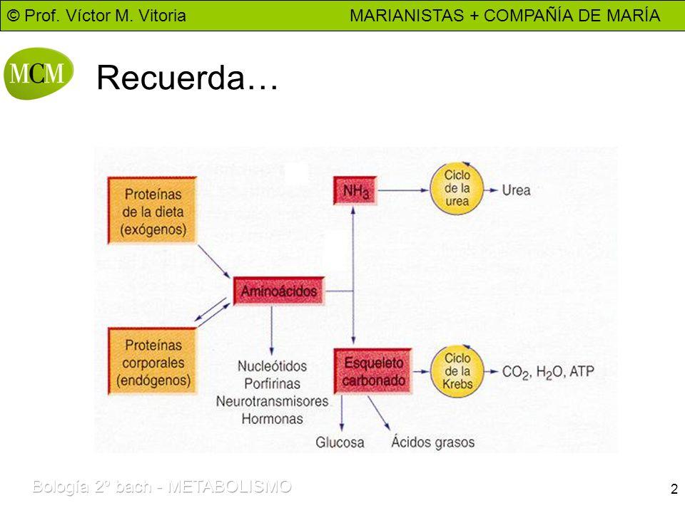 © Prof. Víctor M. Vitoria MARIANISTAS + COMPAÑÍA DE MARÍA 2 Recuerda…