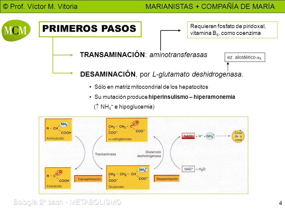 © Prof. Víctor M. Vitoria MARIANISTAS + COMPAÑÍA DE MARÍA 4 PRIMEROS PASOS TRANSAMINACIÓN: aminotransferasas Requieren fosfato de piridoxal, vitamina