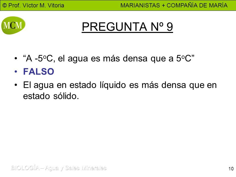 © Prof. Víctor M. Vitoria MARIANISTAS + COMPAÑÍA DE MARÍA 10 PREGUNTA Nº 9 A -5 o C, el agua es más densa que a 5 o C FALSO El agua en estado líquido