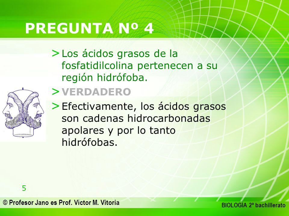 5 © Profesor Jano es Prof. Víctor M. Vitoria BIOLOGÍA 2º bachillerato PREGUNTA Nº 4 > Los ácidos grasos de la fosfatidilcolina pertenecen a su región