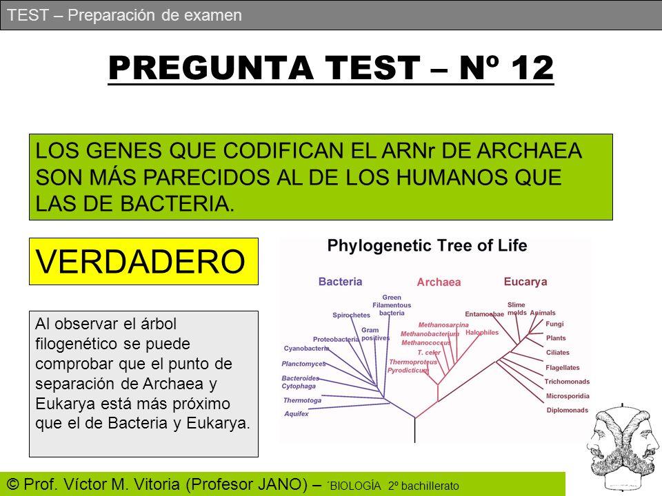 TEST – Preparación de examen © Prof. Víctor M. Vitoria (Profesor JANO) – ´BIOLOGÍA 2º bachillerato PREGUNTA TEST – Nº 12 LOS GENES QUE CODIFICAN EL AR