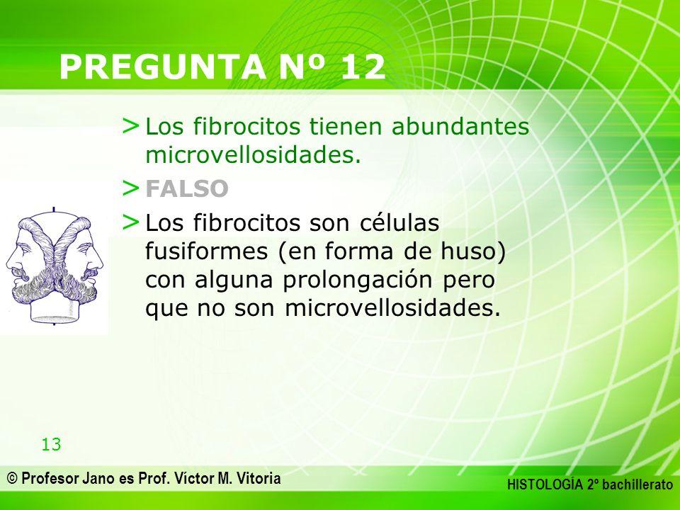 13 © Profesor Jano es Prof. Víctor M. Vitoria HISTOLOGÍA 2º bachillerato PREGUNTA Nº 12 > Los fibrocitos tienen abundantes microvellosidades. > FALSO