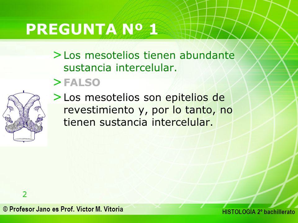 2 © Profesor Jano es Prof. Víctor M. Vitoria HISTOLOGÍA 2º bachillerato PREGUNTA Nº 1 > Los mesotelios tienen abundante sustancia intercelular. > FALS