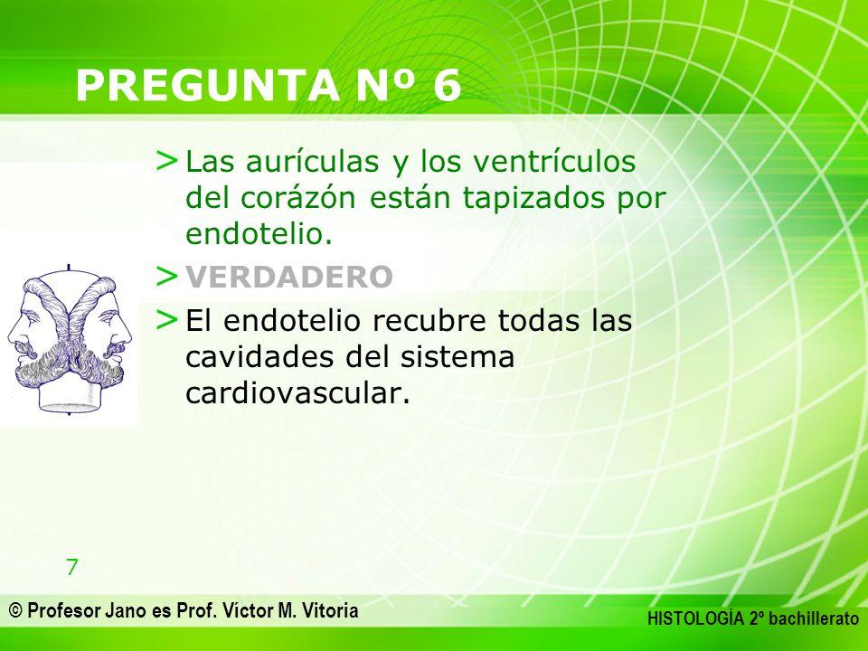 7 © Profesor Jano es Prof. Víctor M. Vitoria HISTOLOGÍA 2º bachillerato PREGUNTA Nº 6 > Las aurículas y los ventrículos del corázón están tapizados po