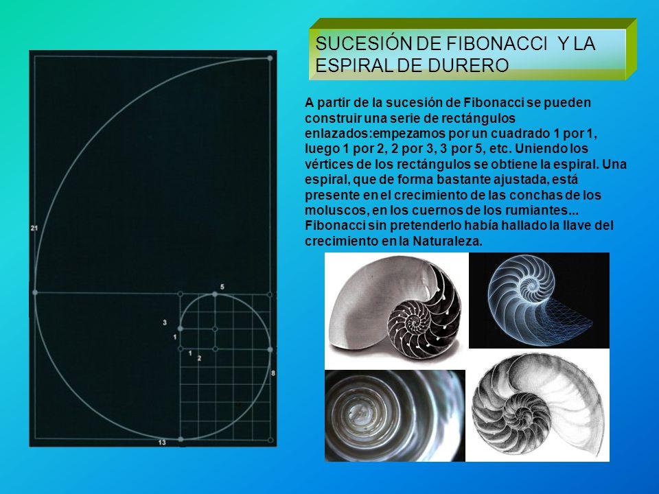 SUCESIÓN DE FIBONACCI Y LA ESPIRAL DE DURERO A partir de la sucesión de Fibonacci se pueden construir una serie de rectángulos enlazados:empezamos por
