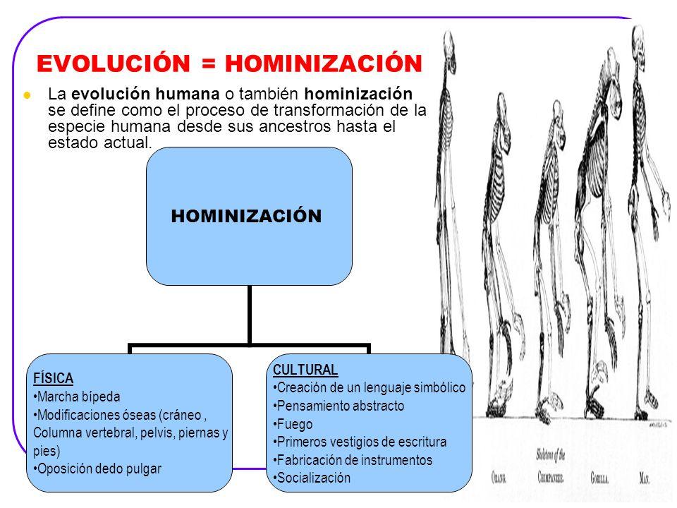 EVOLUCIÓN = HOMINIZACIÓN La evolución humana o también hominización se define como el proceso de transformación de la especie humana desde sus ancestr