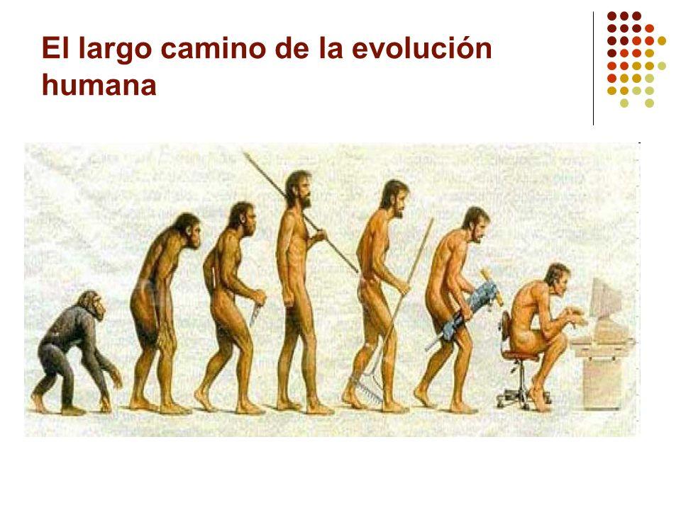 El largo camino de la evolución humana