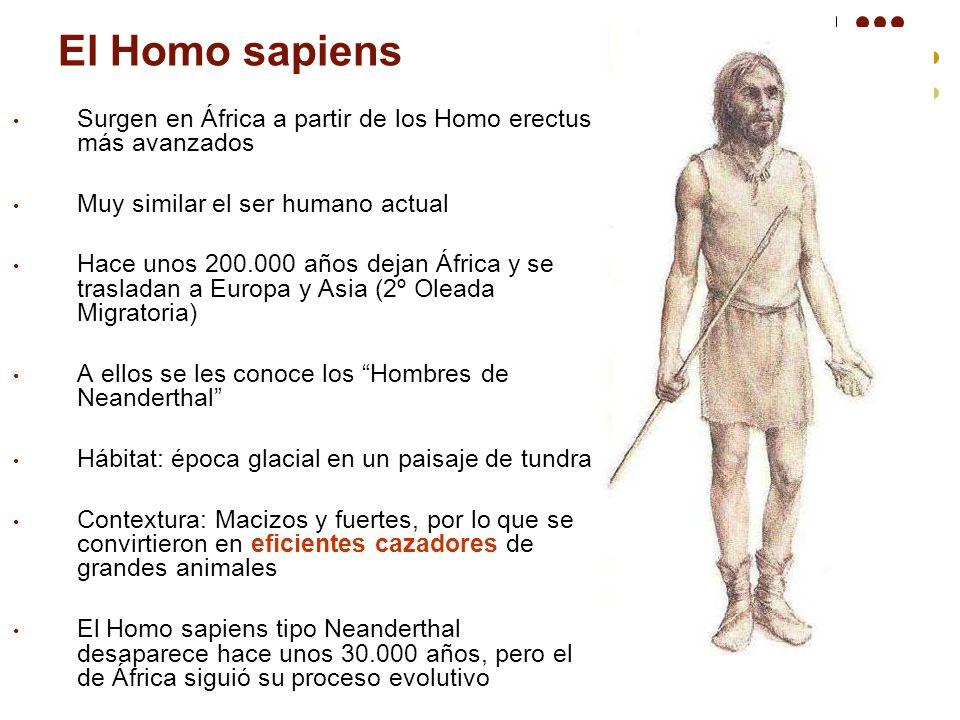El Homo sapiens Surgen en África a partir de los Homo erectus más avanzados Muy similar el ser humano actual Hace unos 200.000 años dejan África y se