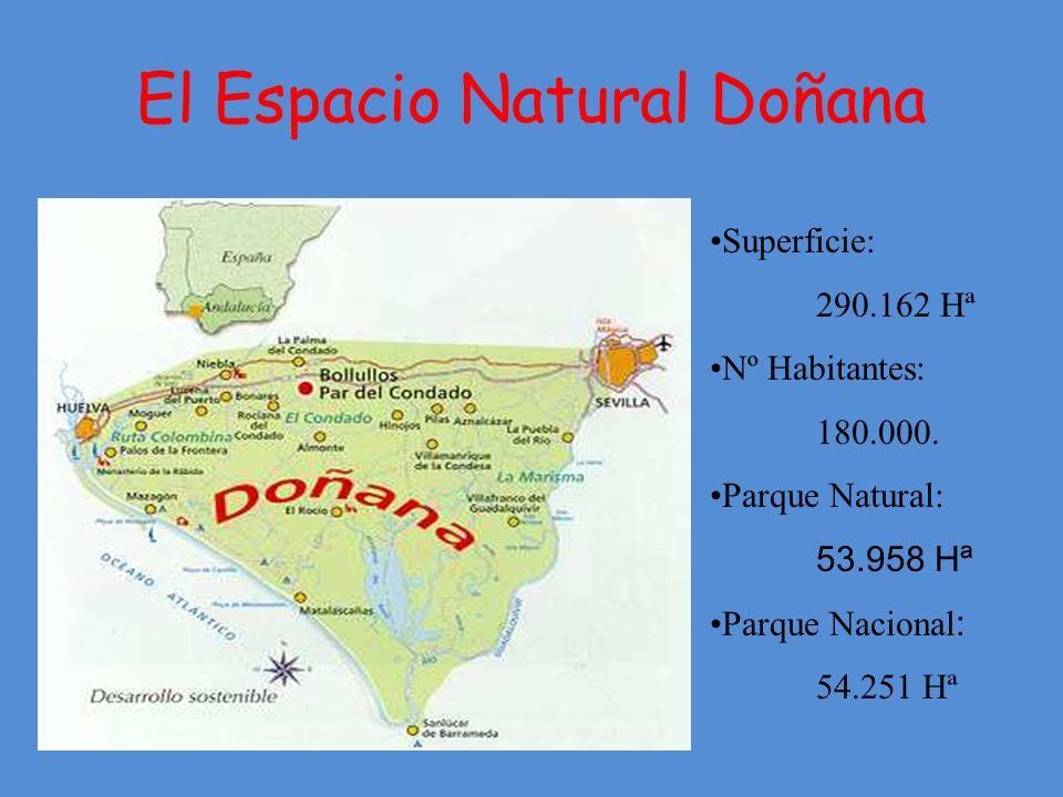El Espacio Natural Doñana Superficie: 290.162 Hª Nº Habitantes: 180.000.
