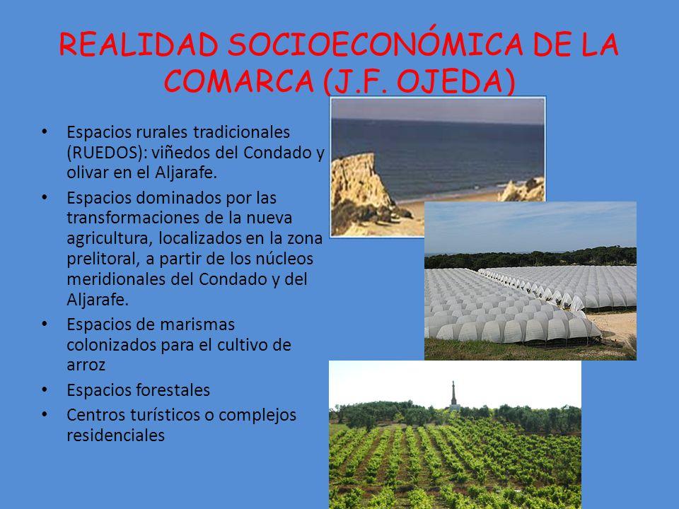 REALIDAD SOCIOECONÓMICA DE LA COMARCA (J.F.