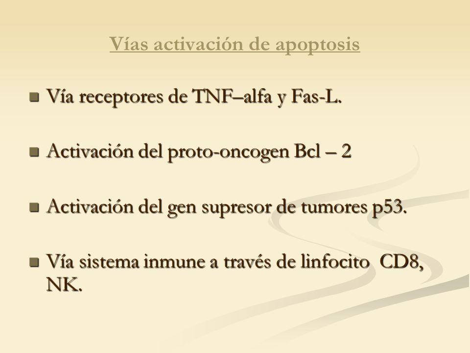 Vías activación de apoptosis Vía receptores de TNF–alfa y Fas-L. Vía receptores de TNF–alfa y Fas-L. Activación del proto-oncogen Bcl – 2 Activación d