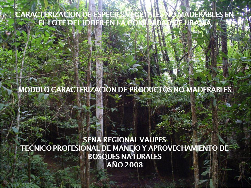REGIONAL VAUPES T.P en manejo y aprovechamiento de bosques naturales REGIONAL VAUPES CARACTERIZACION DE ESPECIES VEGETALES NO MADERABLES EN EL LOTE DE