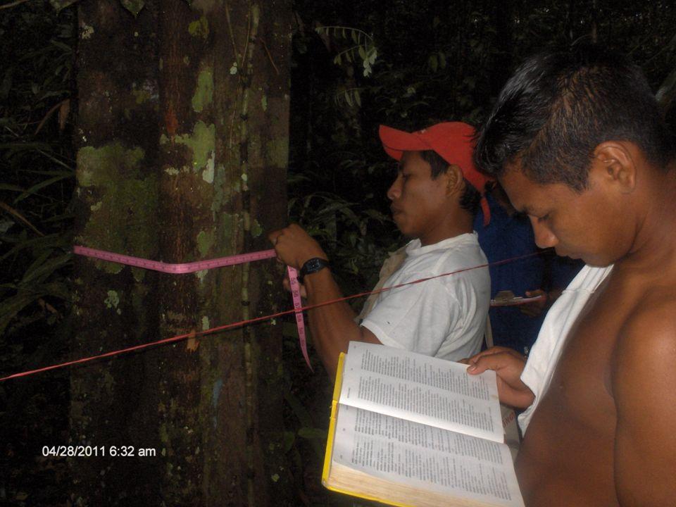 T.P en manejo y aprovechamiento de bosques naturales REGIONAL VAUPES